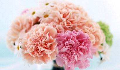chon hoa tang thay co ngay 20-11