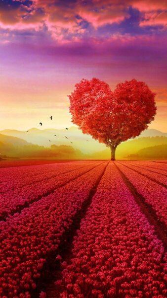 ảnh cây tình yêu đẹp nhất cho ngày valentine