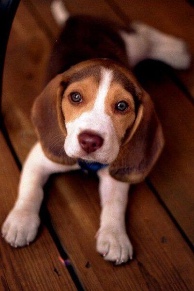 ảnh chó đẹp nhất thế giới