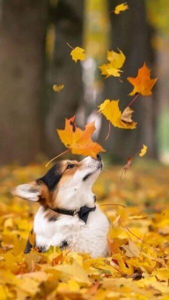 ảnh chú chó dễ thương đang nô đùa bên lá mùa thu