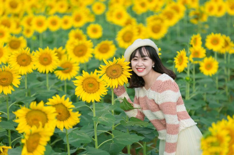 ảnh girl xinh trong vườn hoa hướng dương