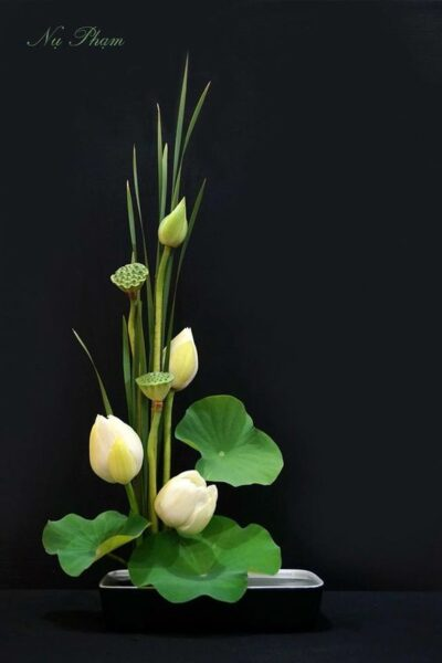 cách cắm hoa sen nghệ thuật trang trí phòng làm việc