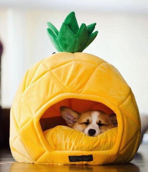 Hình ảnh chó cute cho điện thoại