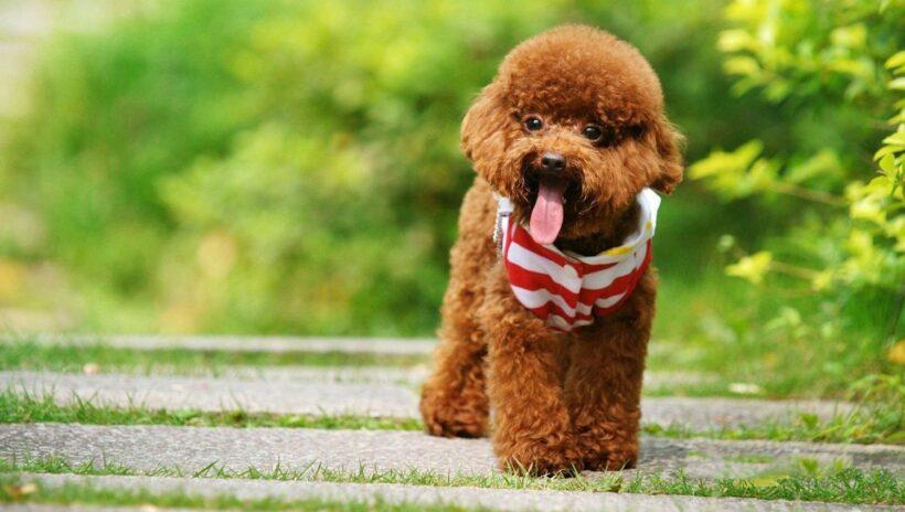 hình ảnh con chó dễ thương cute nhất thế giới