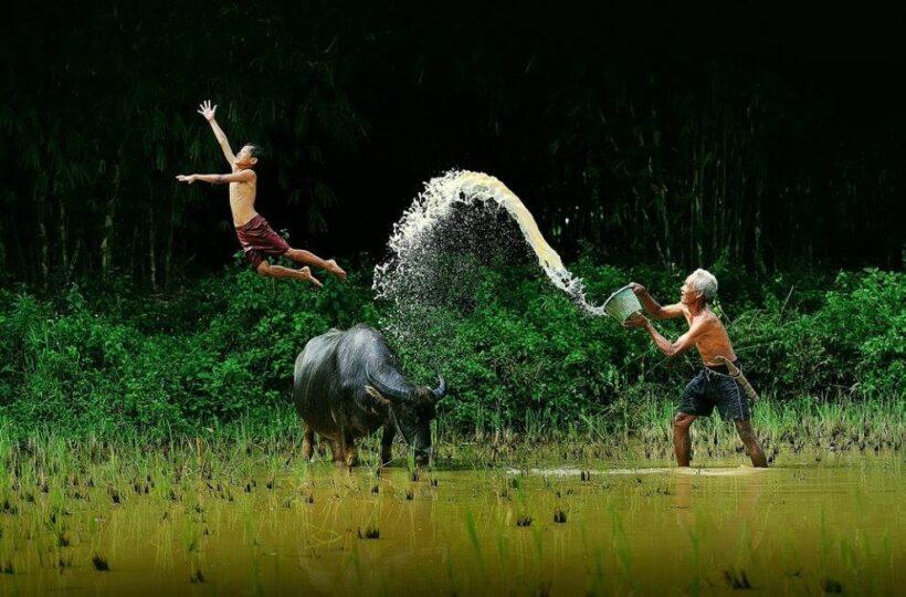 hình ảnh con người việt nam nô đùa trên cánh đồng lúa