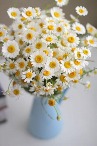 hình ảnh lọ hoa cúc trắng