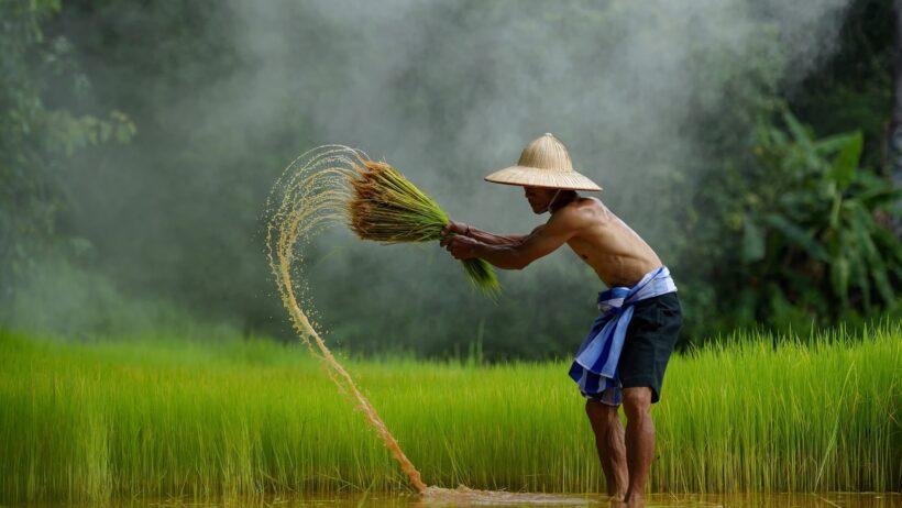 Những hình ảnh đẹp về quê hương, đất nước, con người Việt Nam