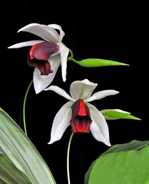 Ảnh nền hoa phong lan độc lạ