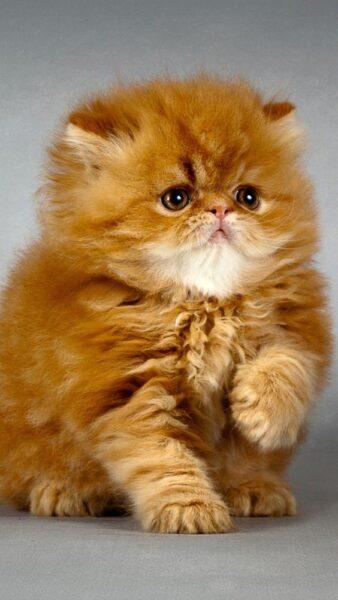 ảnh nền mèo dễ thương