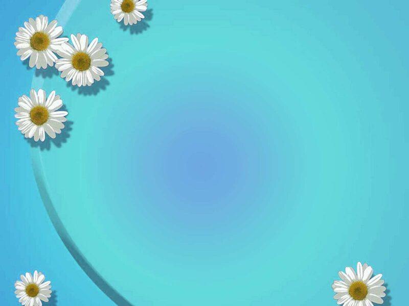 hình ảnh background xanh dương hoa cúc