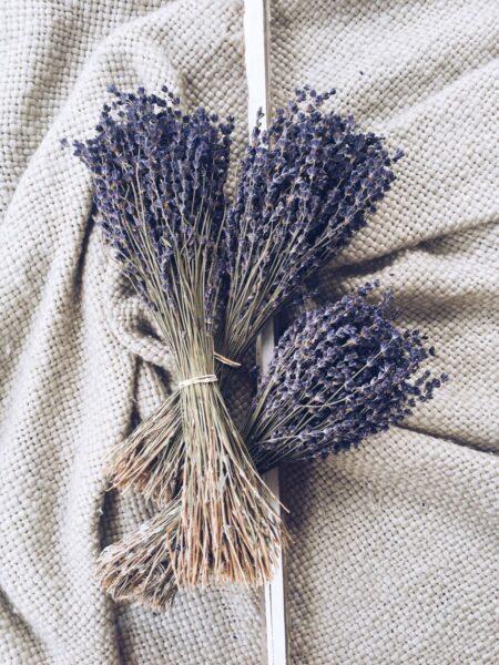 Tổng hợp những hình ảnh về hoa lavender khô đẹp nhất