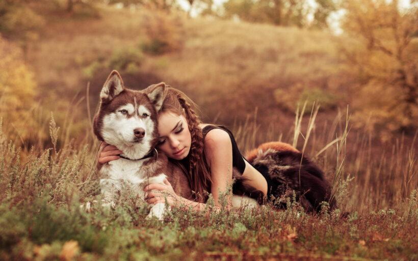 hình ảnh chú chó bên cô gái trong thiên nhiên
