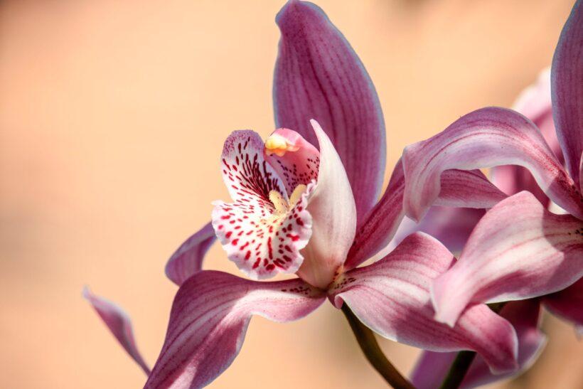 Hình ảnh giống hoa lan đẹp nhất