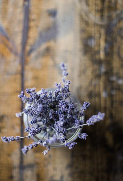 Hình ảnh hoa lavender đẹp nhất