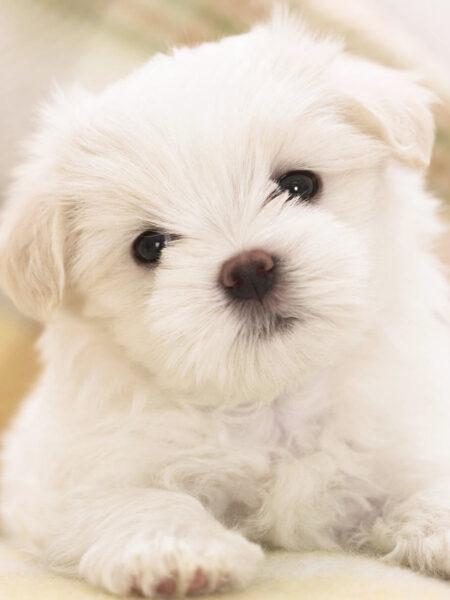 hình ảnh màu trắng cute