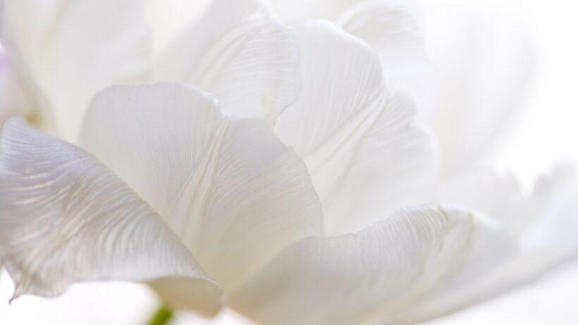 hình ảnh màu trắng tinh khiết