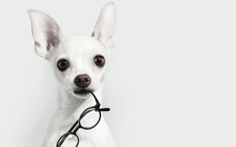 hình ảnh màu trắng về chú chó