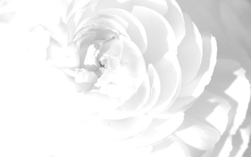 hình ảnh màu trắng về hoa