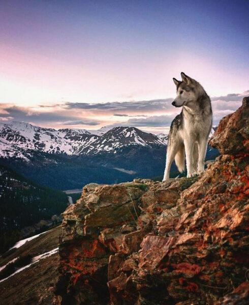 hình nền chú chó trong thiên nhiên rộng lớn