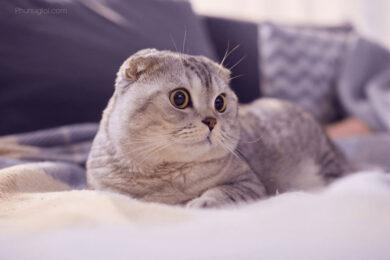 hình nền con mèo dễ thương