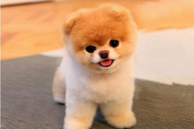 hình nền desktop chú chó con xinh xắn