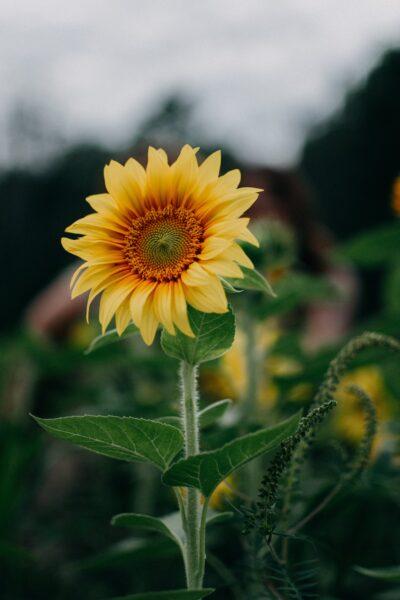 hình nền hoa đẹp cho điện thoại