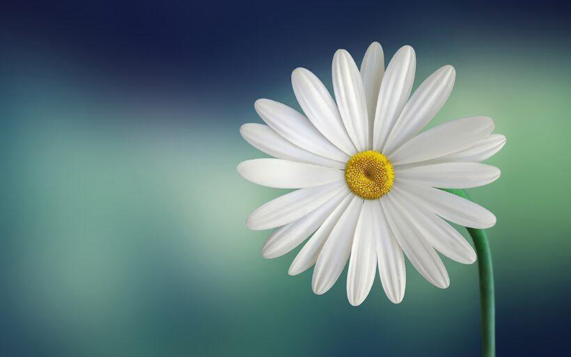 hình nền hoa đẹp cho máy tính
