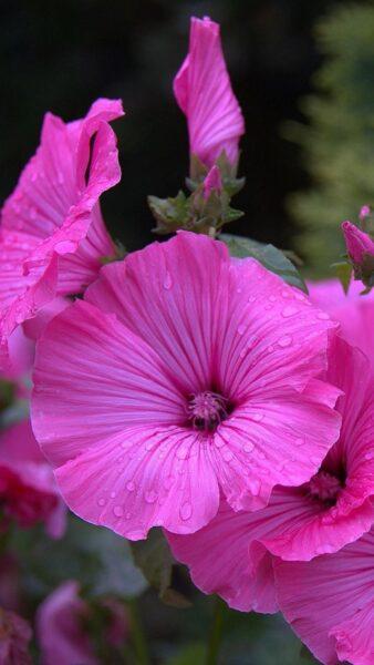 hình nền hoa đẹp tím lịm