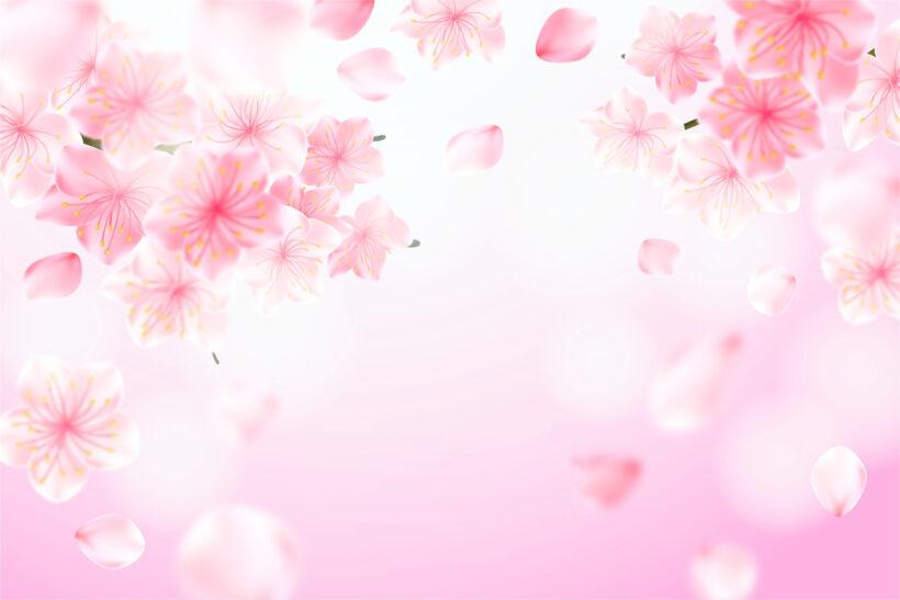 hình nền màu hồng dễ thương
