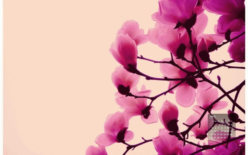 hình nền màu hồng hoa lan cho laptop
