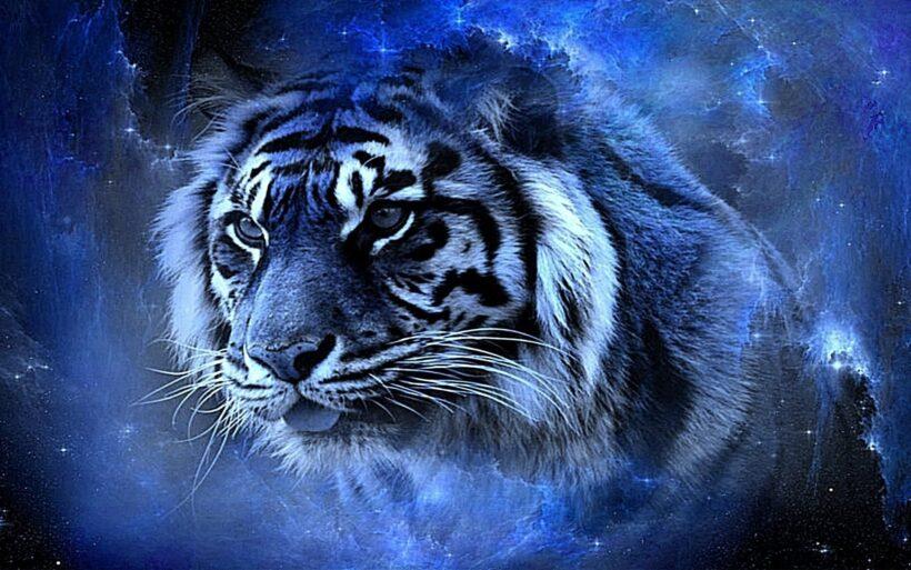 tổng hợp hình nền con hổ đẹp nhất