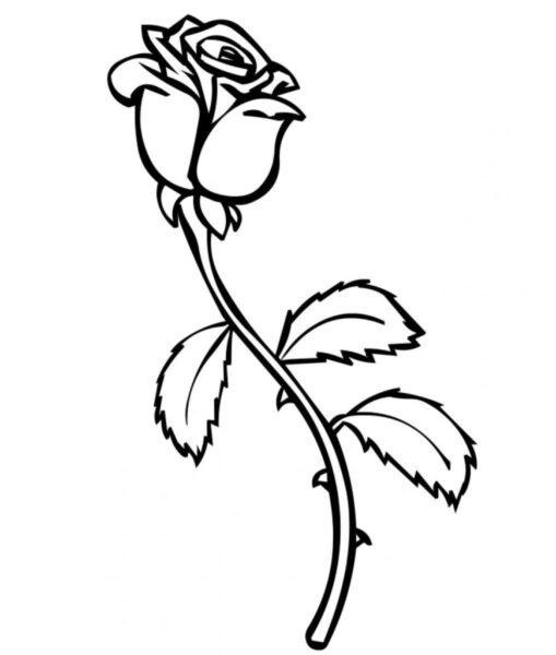 Ảnh bông hoa hồng cho bé tập tô