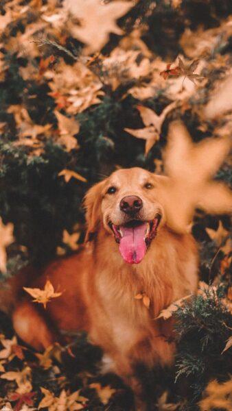 ảnh đại diện con chó trong rừng cây vào mùa thu