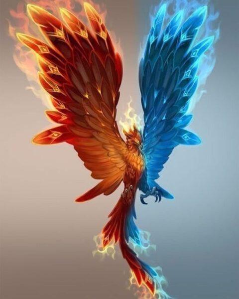 ảnh đại diện con phượng hoàng lửa