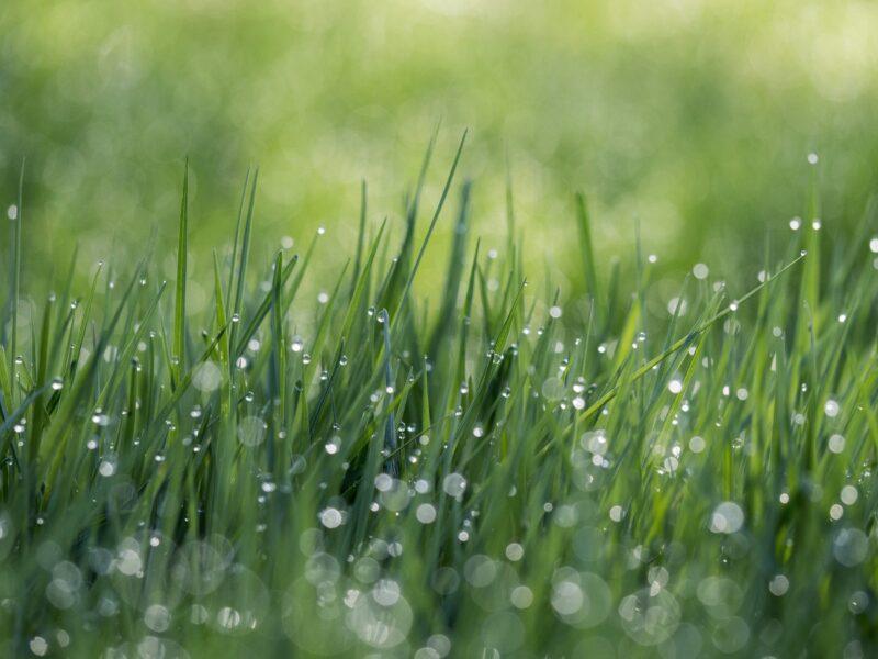 ảnh giọt nước đọng trên bụi cỏ