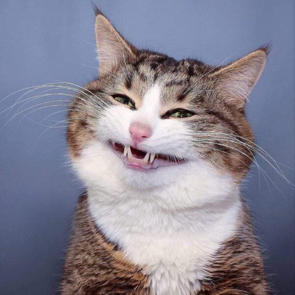 ảnh hài hước con mèo biết cười