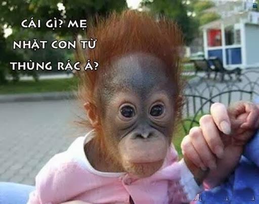 ảnh hài hước về con khỉ
