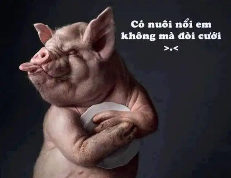 ảnh hài hước về con lợn
