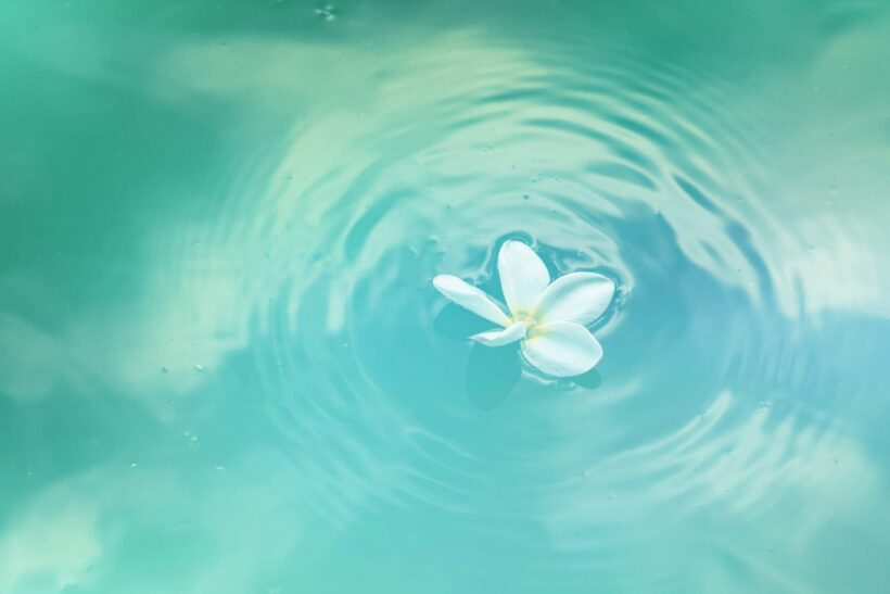 ảnh nước và bông hoa trôi nhẹ nhàng