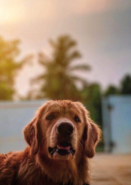 ảnh thiên nhiên buồn và chú chó