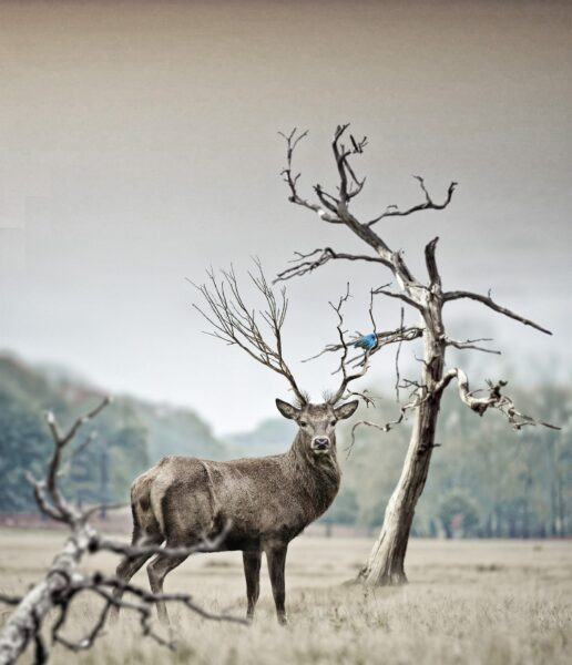 ảnh thiên nhiên buồn và chú hươu