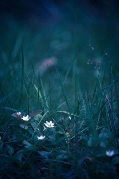 ảnh thiên nhiên về bông hoa buồn