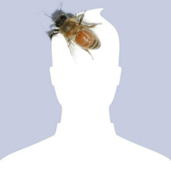 avatar facebook độc nam hình con ong