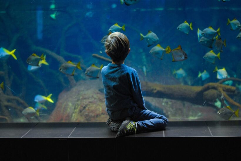 hình ảnh cậu bé ngắm nhìn đàn cá qua bể kính