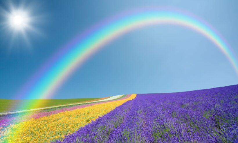 Hình ảnh cầu vồng trên cánh đồng hoa lavender