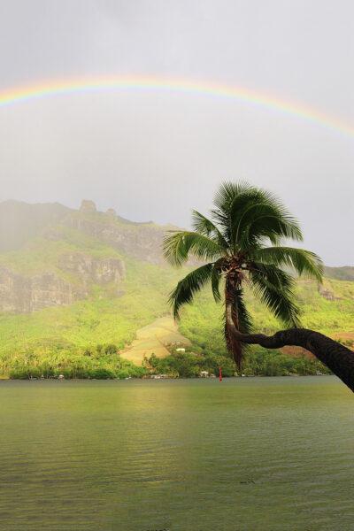 Hình ảnh cầu vồng và cây dừa