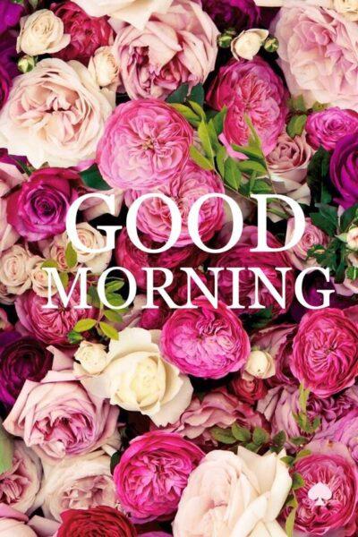 Hình ảnh chúc buổi sáng bằng hoa đẹp mắt