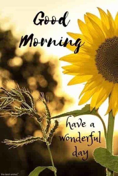 Hình ảnh chúc buổi sáng hoa hướng dương