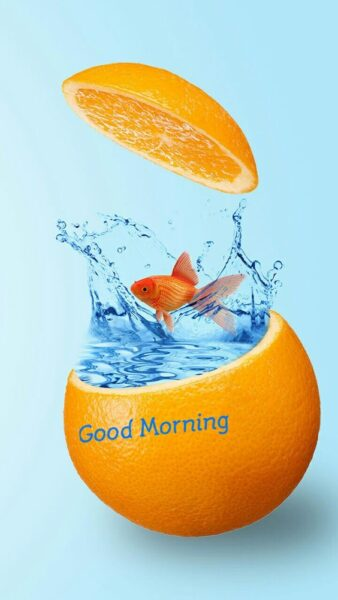 Hình ảnh chúc buổi sáng quả cam dễ thương