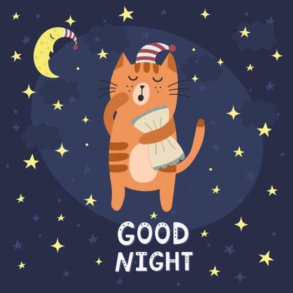 hình ảnh chúc ngủ ngon kute về con mèo